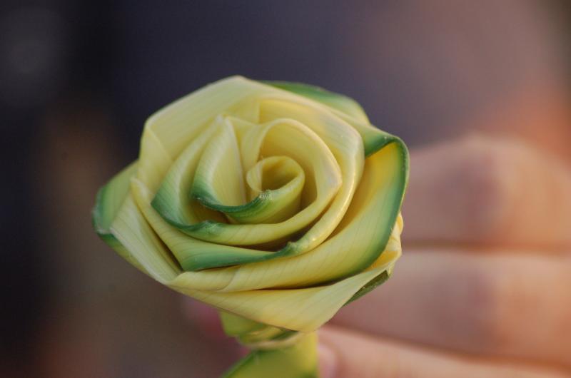 Rose Palm