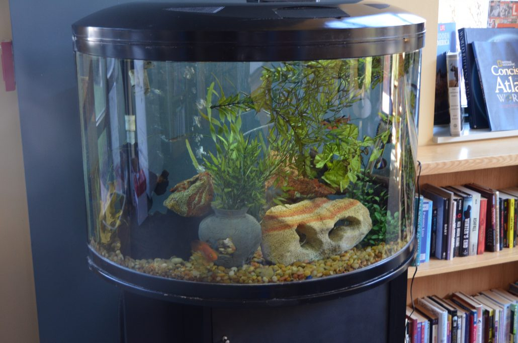 Fish Tanks Provide Therapeutic Benefits At Mercy Home