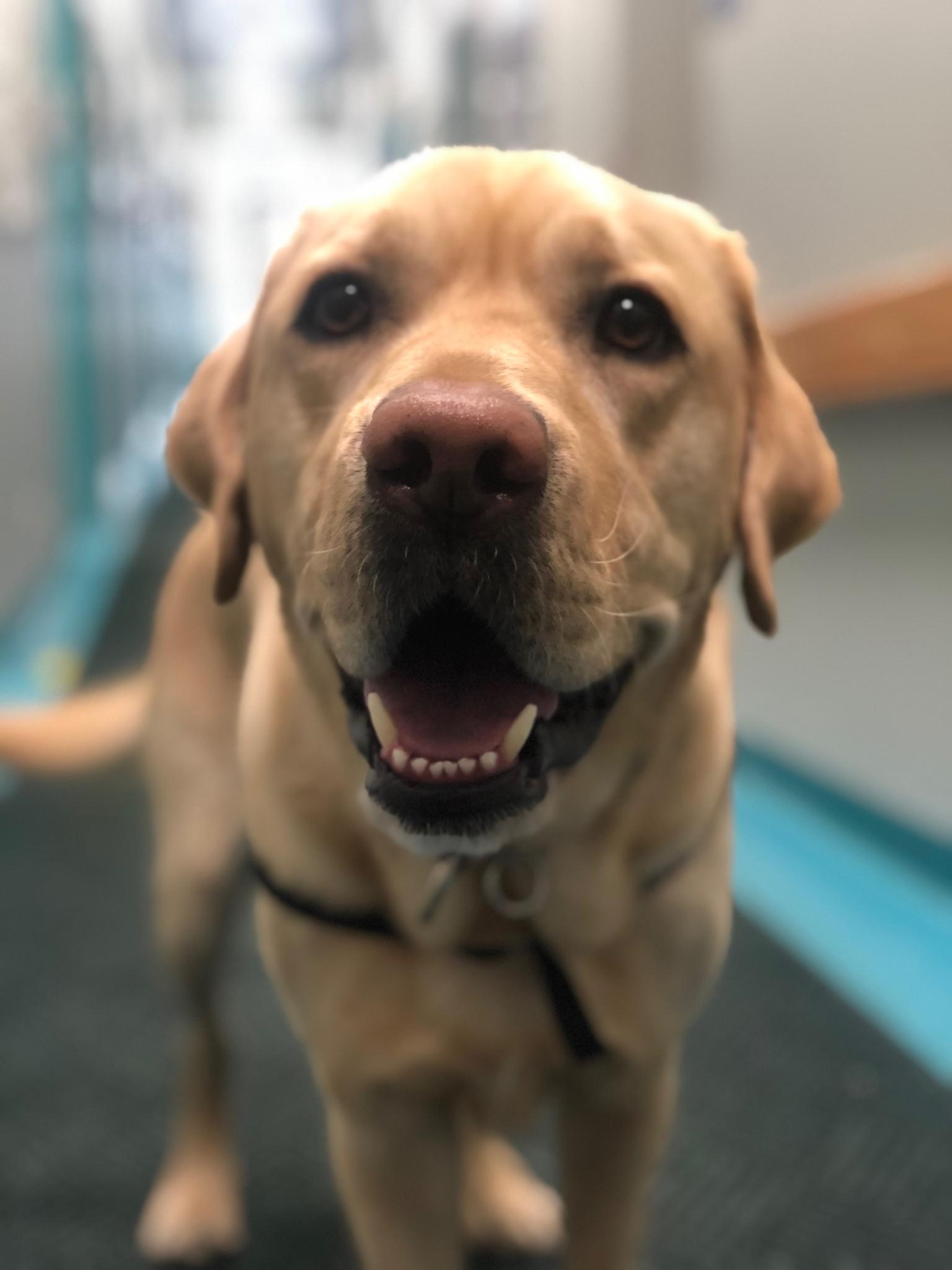 Facility dog Pongo in the hallway