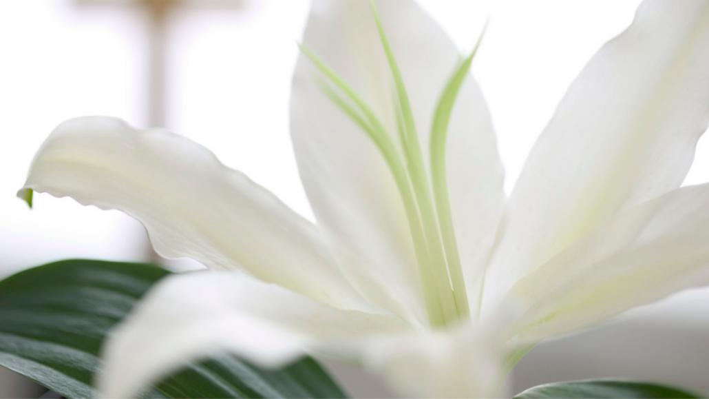 Easter Morning Prayer